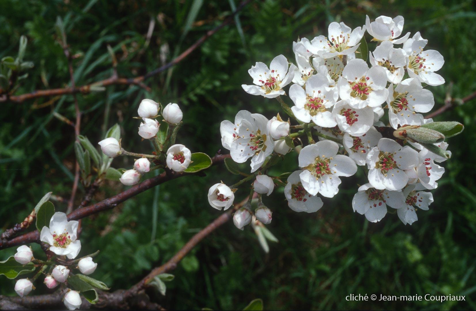 Fleurs-div-199.jpg