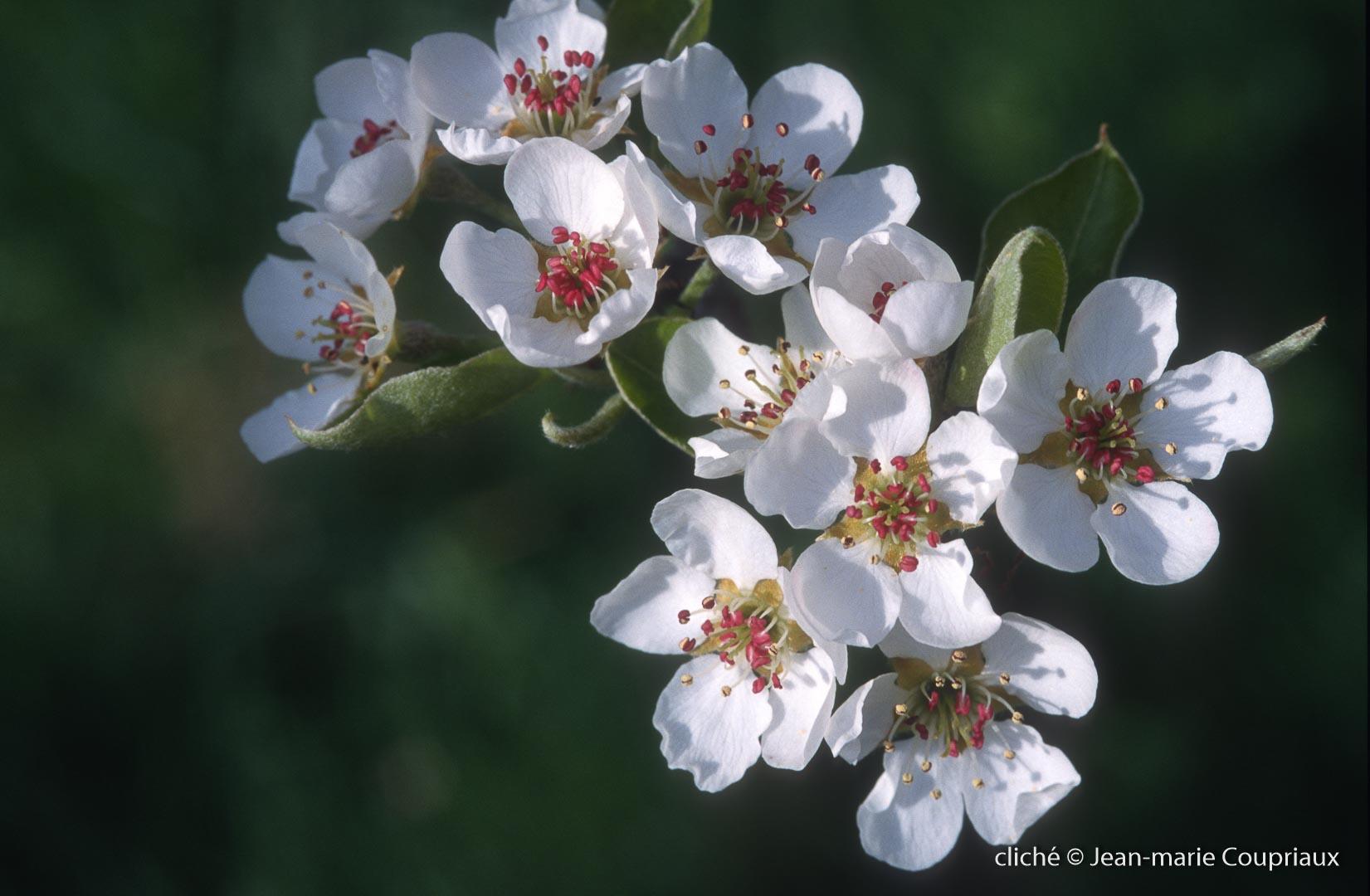 Fleurs-div-200.jpg