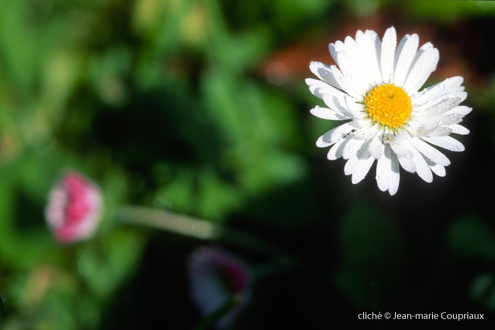 Fleurs-div-220.jpg