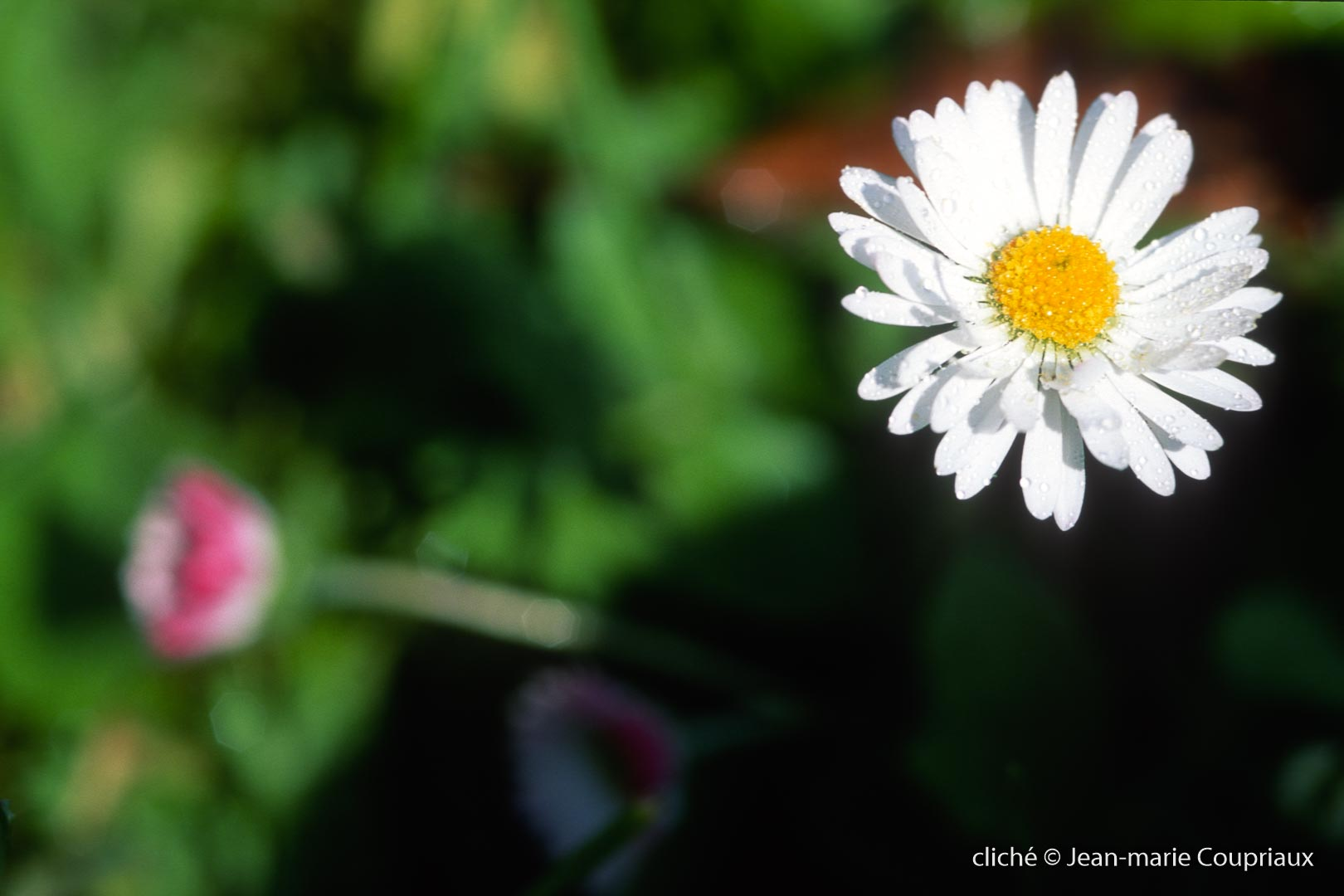 Fleurs-div-220