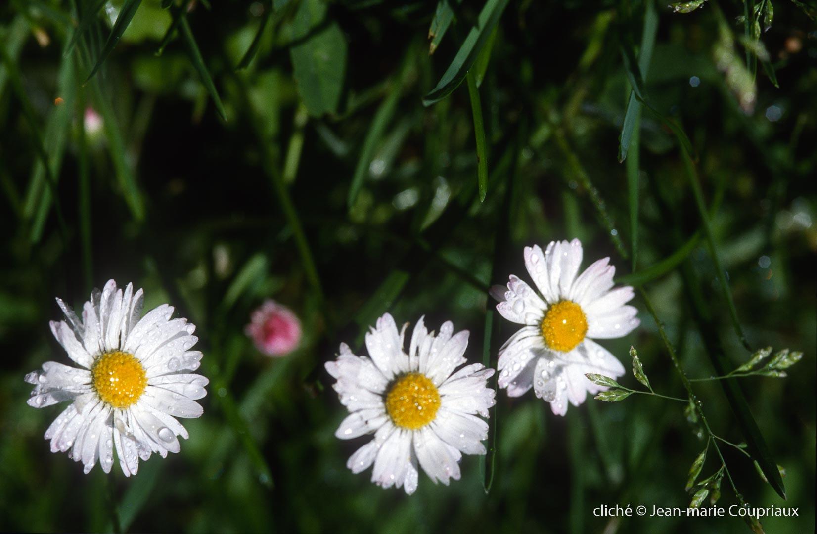 Fleurs-div-221.jpg