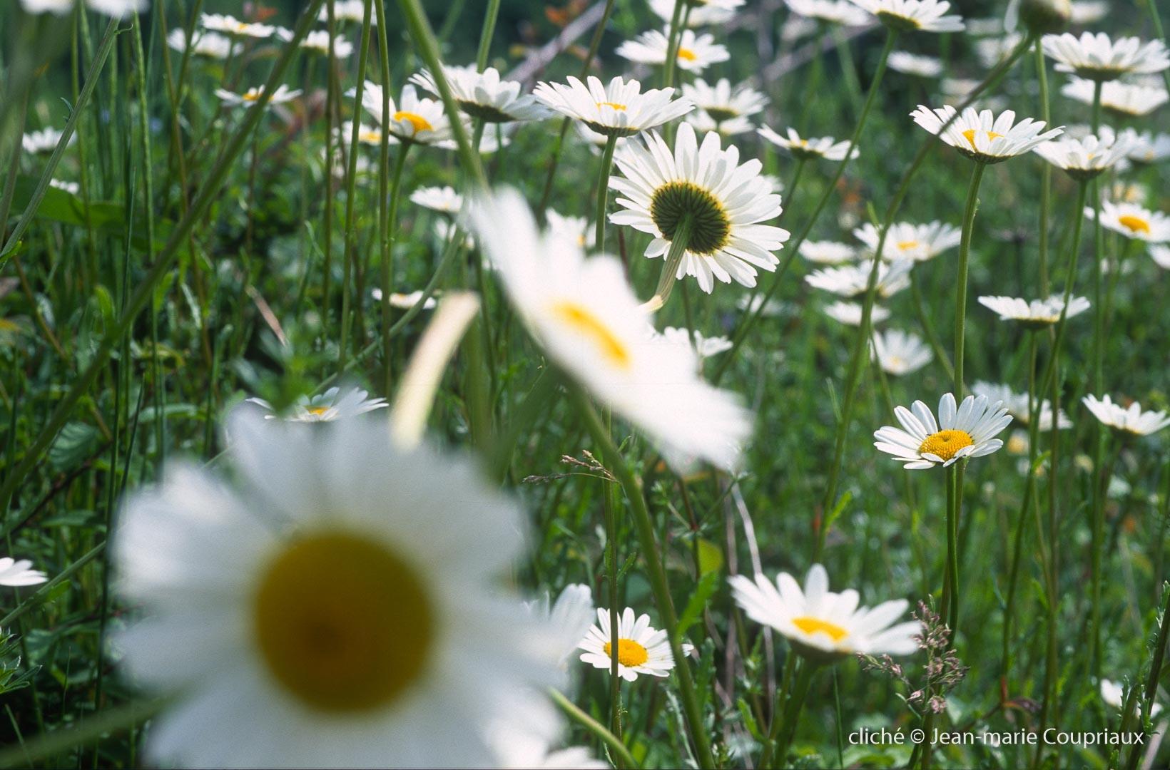 Fleurs-div-222.jpg