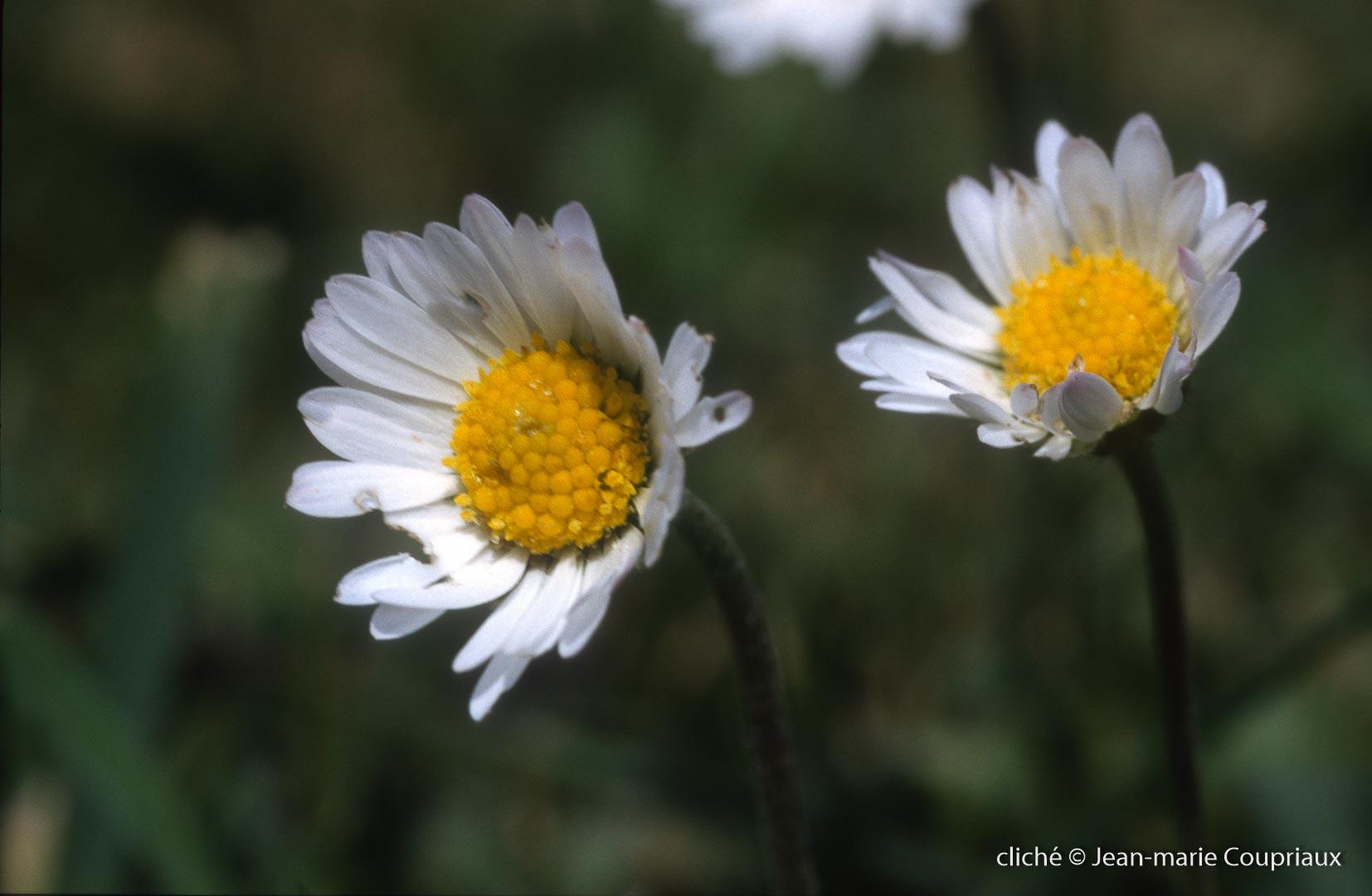 Fleurs-div-223.jpg