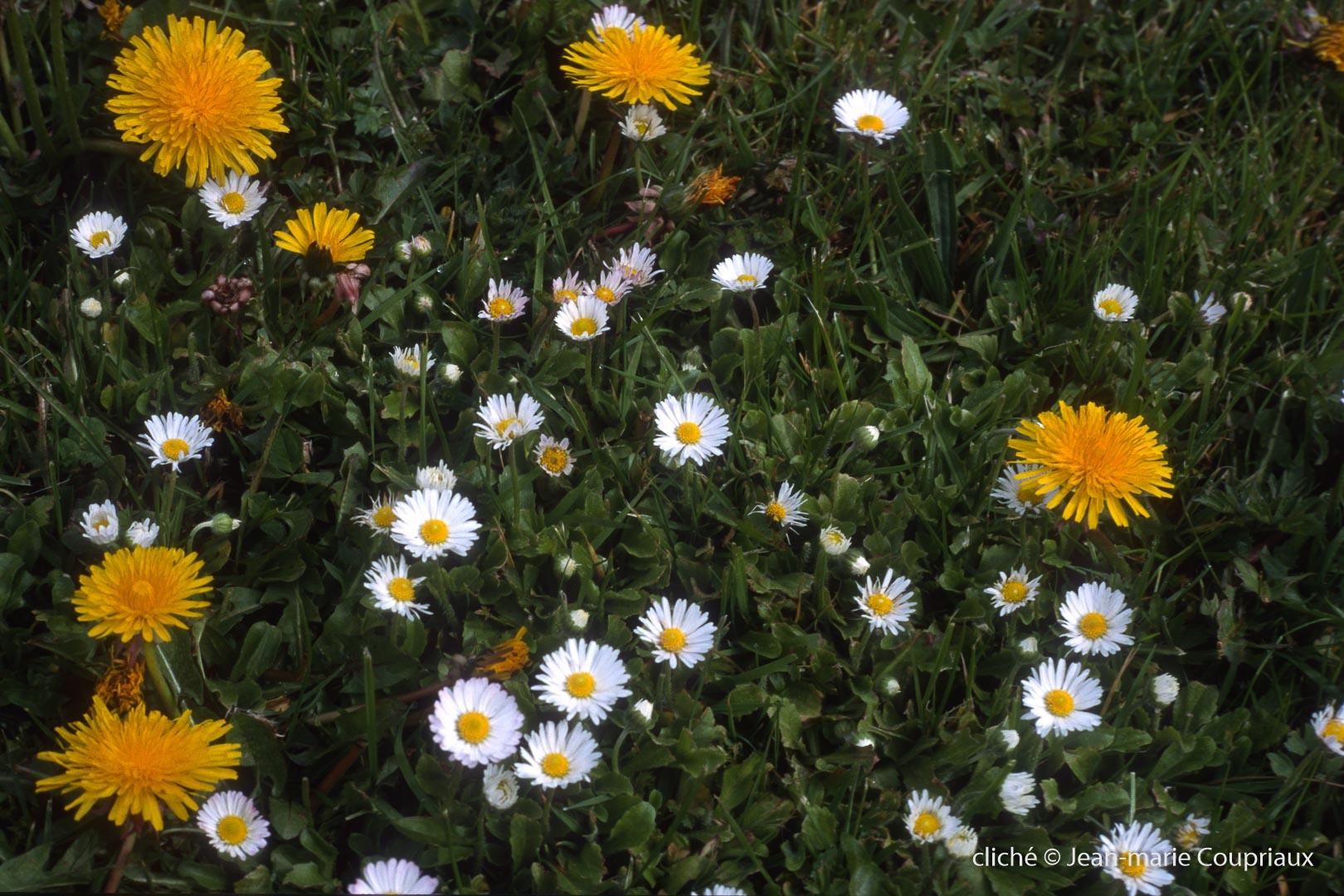 Fleurs-div-224