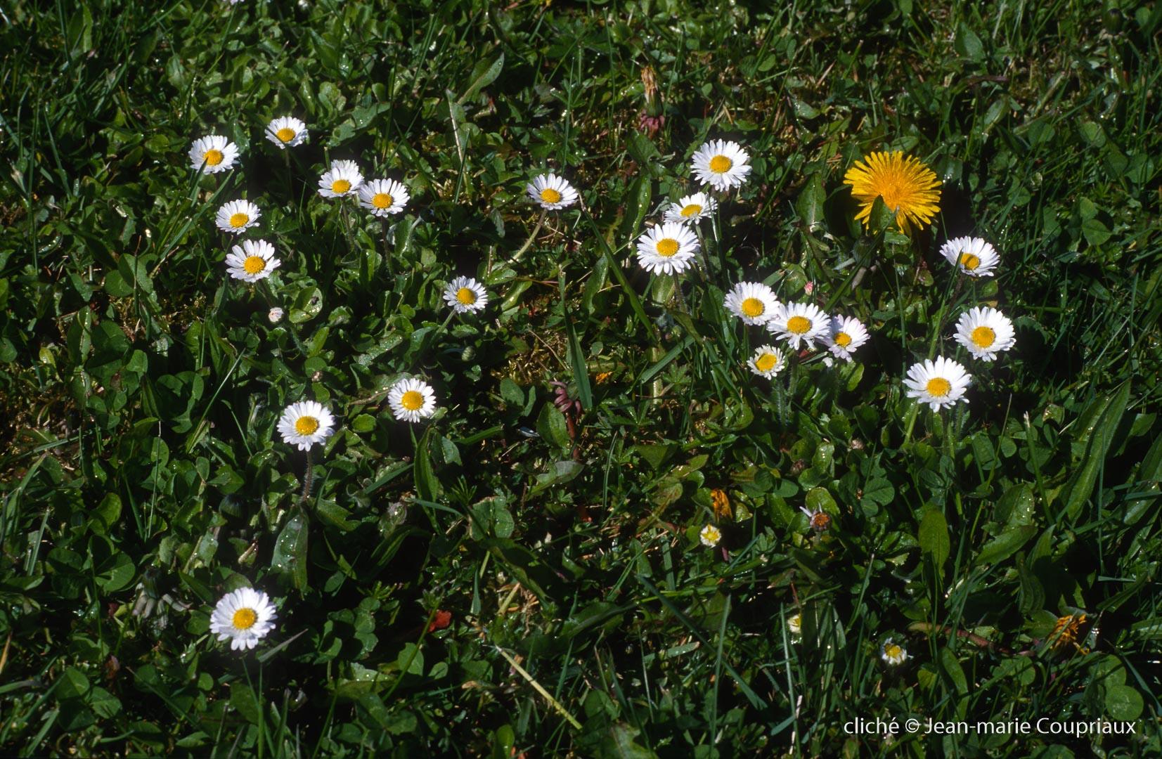 Fleurs-div-226.jpg