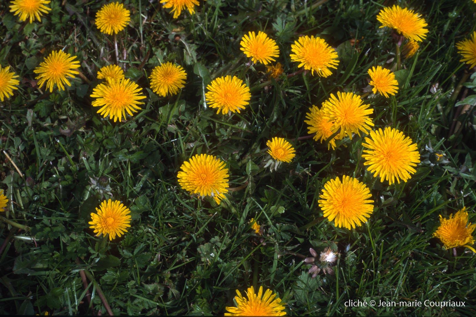 Fleurs-div-228.jpg