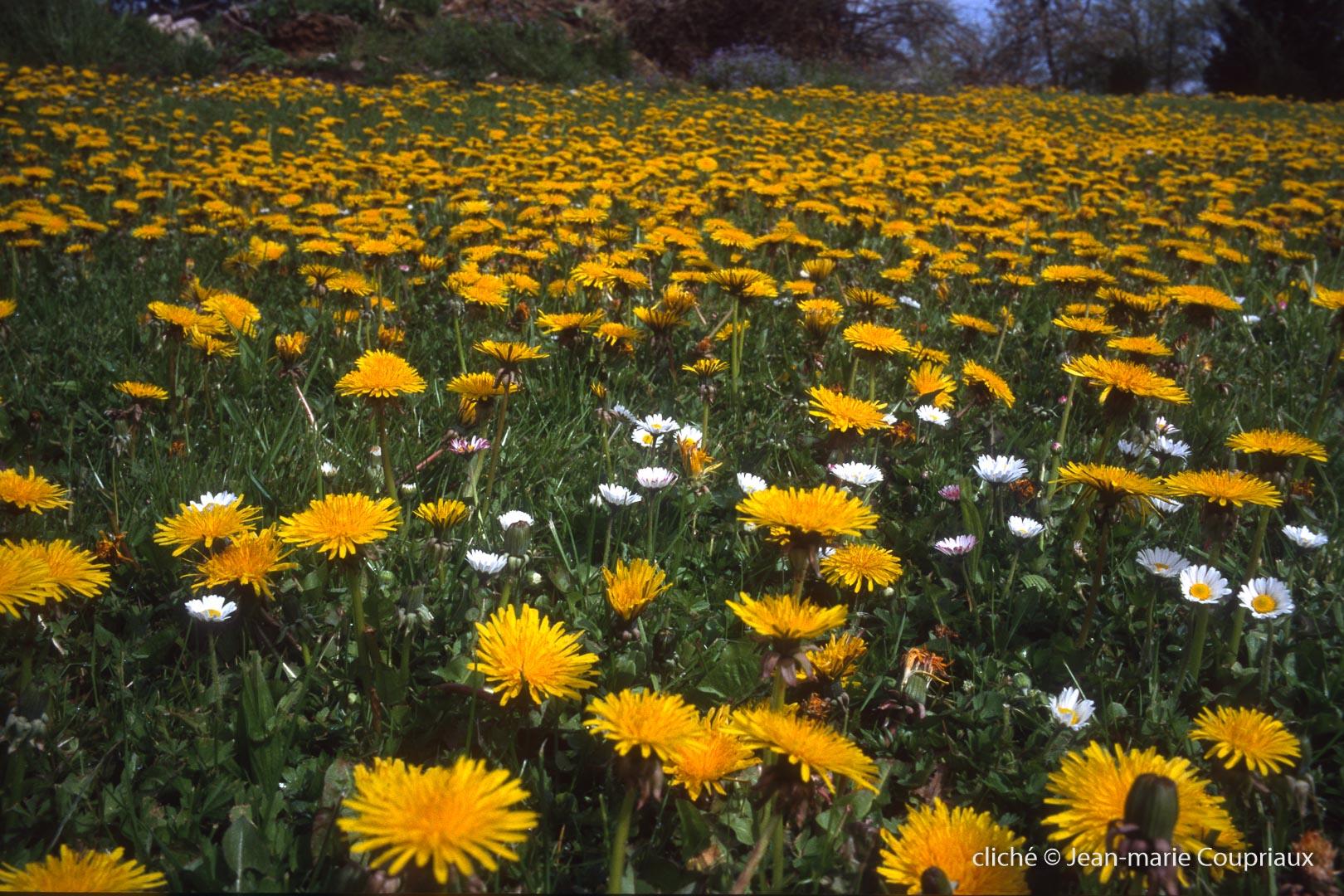 Fleurs-div-229.jpg