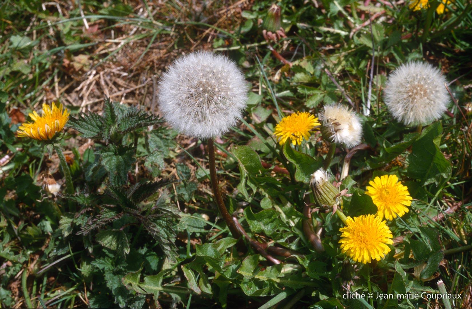 Fleurs-div-230.jpg