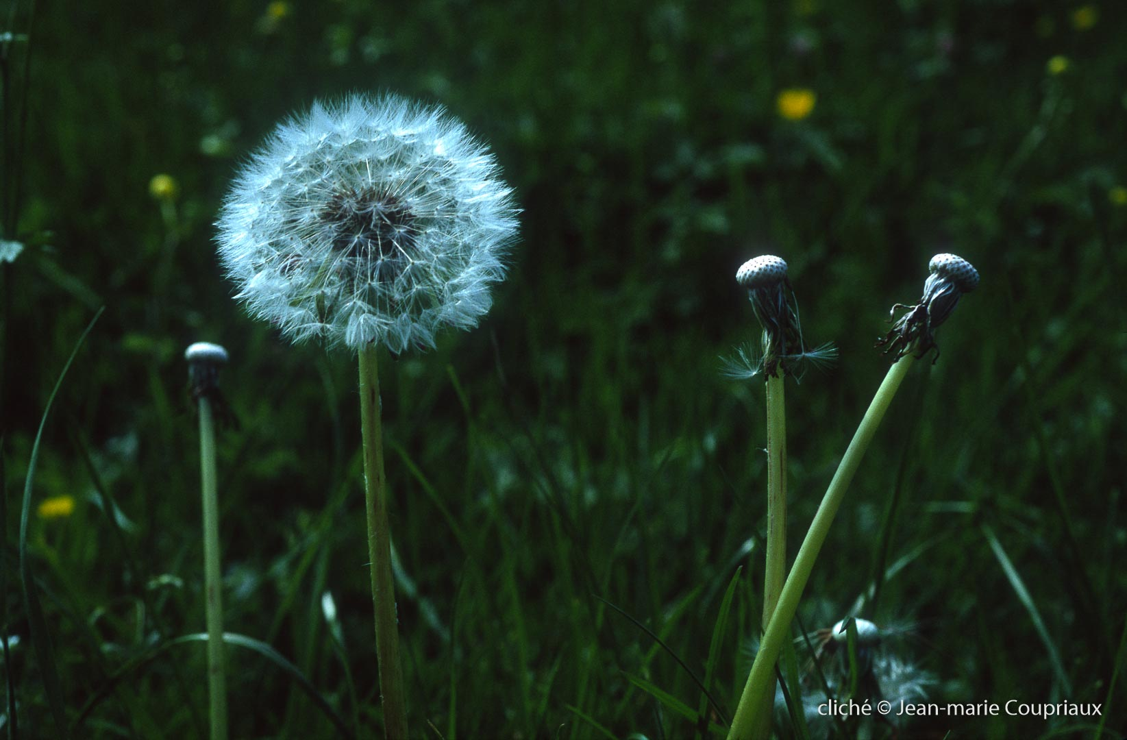 Fleurs-div-231.jpg