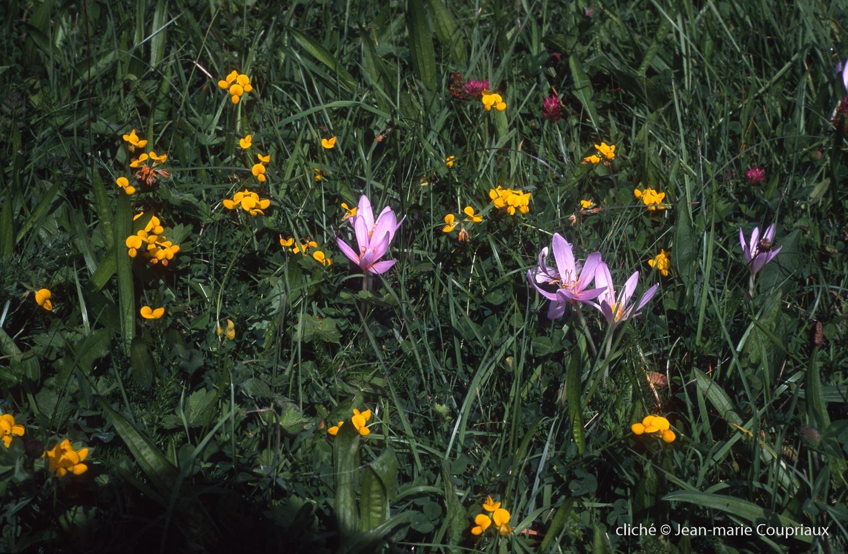 Fleurs-div-233