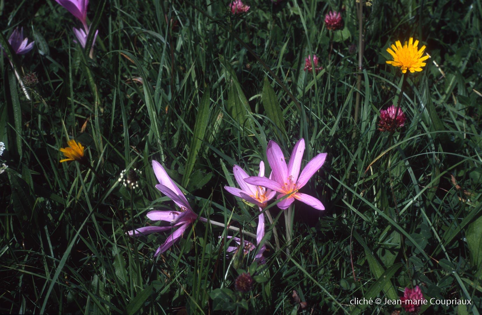 Fleurs-div-234