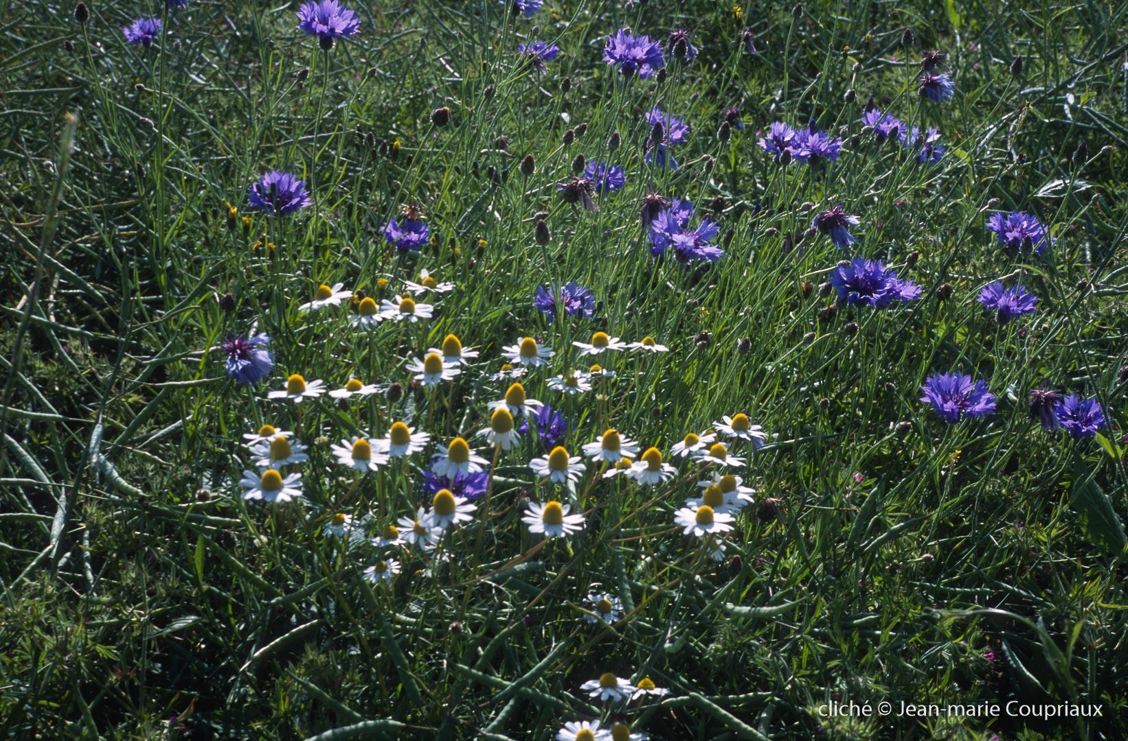 Fleurs-div-238.jpg