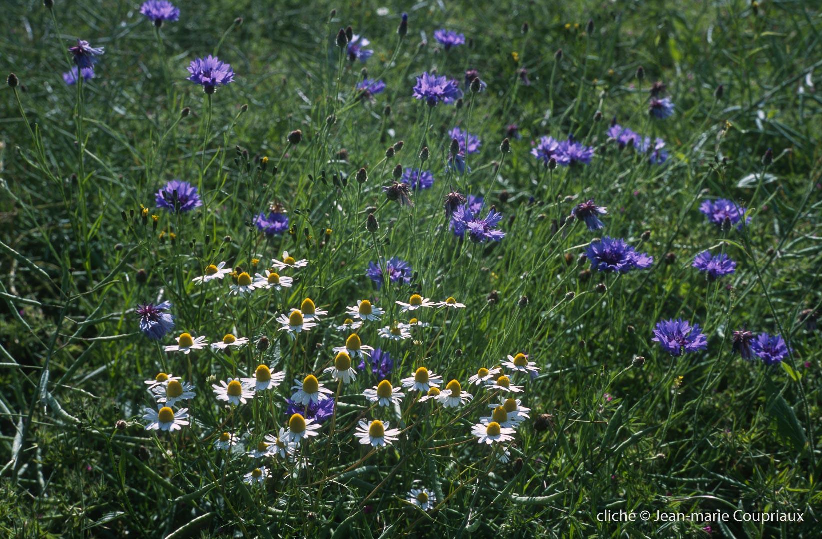 Fleurs-div-239.jpg
