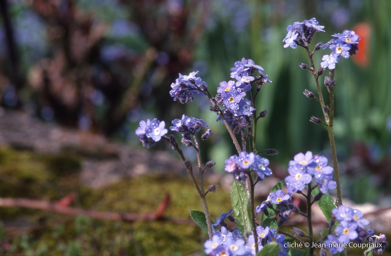 Fleurs-div-241