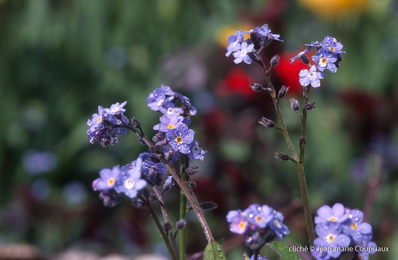 Fleurs-div-242