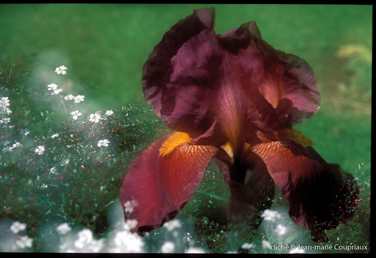 Fleurs-div-247
