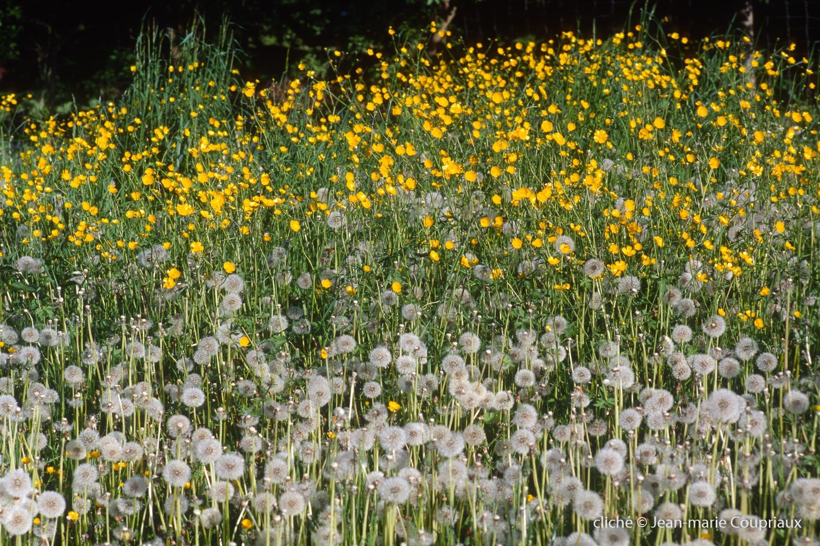 Fleurs-div-250.jpg