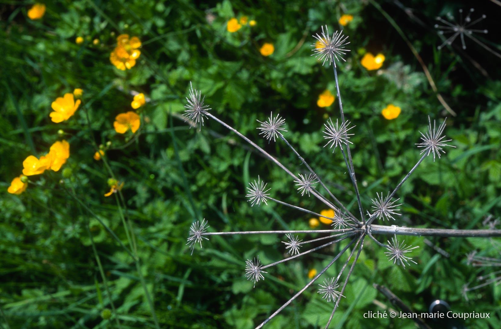 Fleurs-div-254