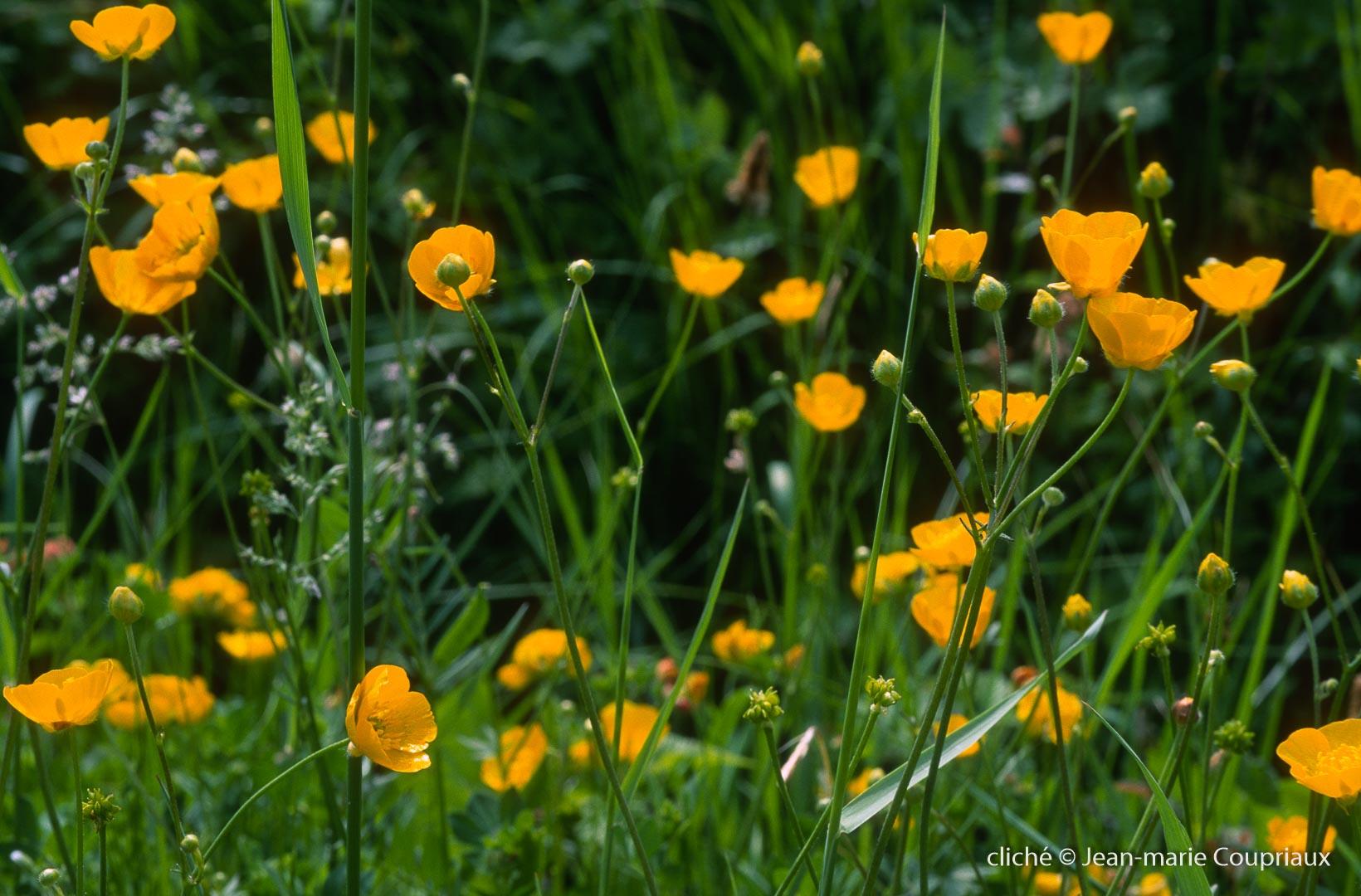 Fleurs-div-255.jpg