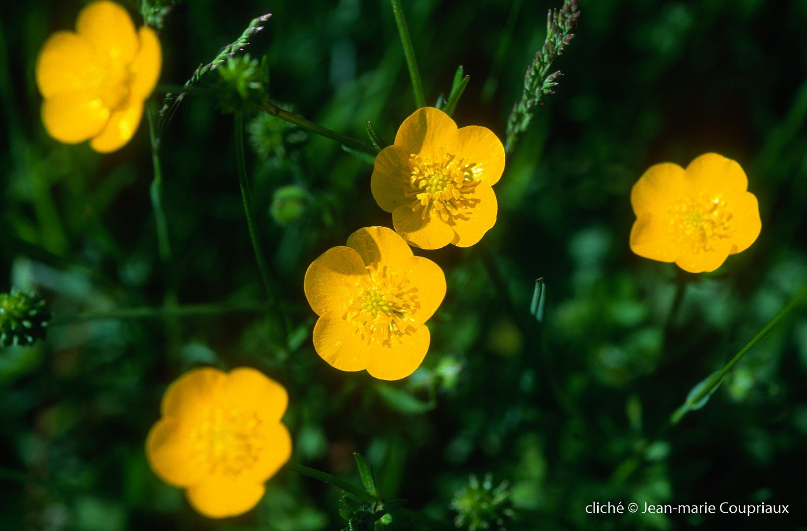 Fleurs-div-256