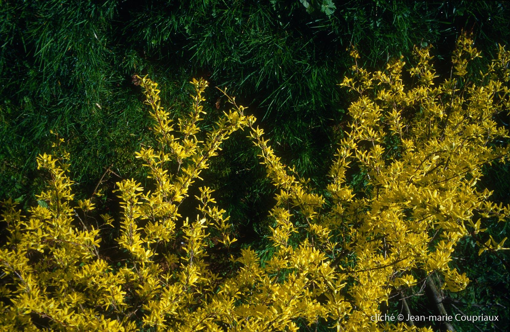 Fleurs-div-260.jpg