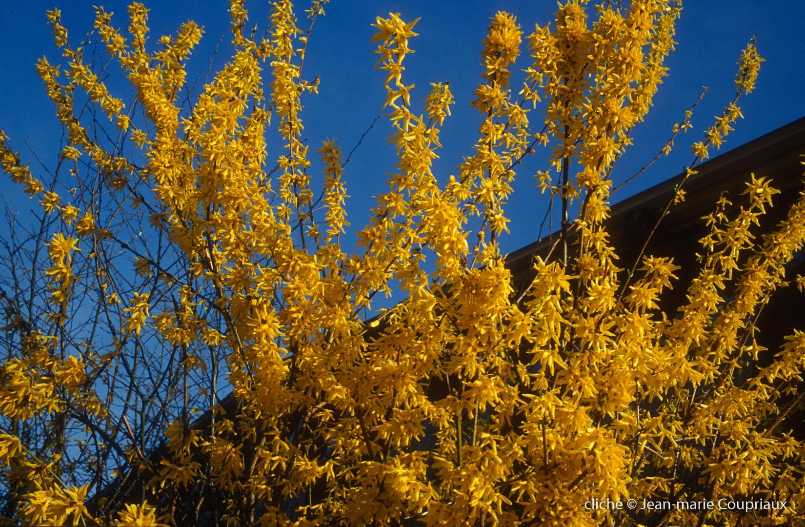 Fleurs-div-264.jpg