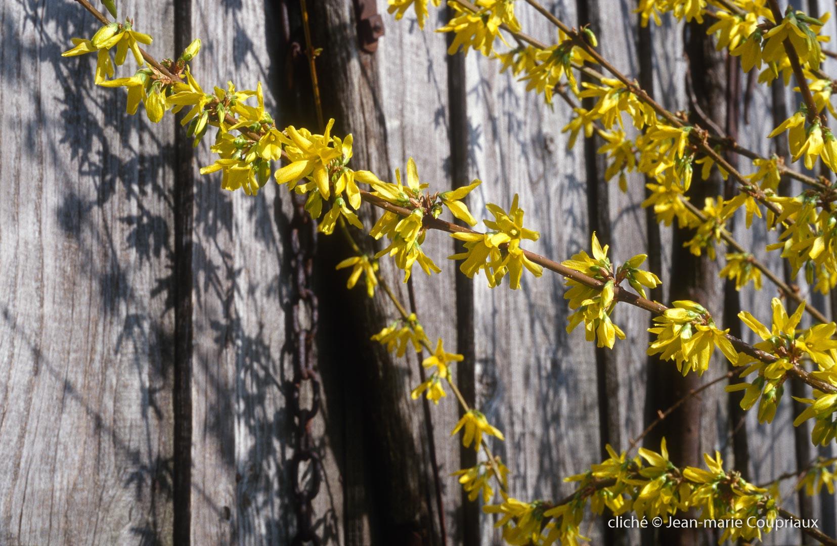 Fleurs-div-265-1-1.jpg