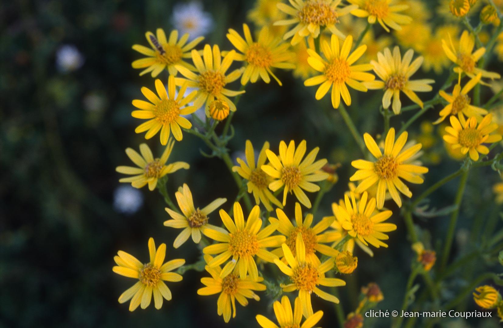 Fleurs-div-273.jpg