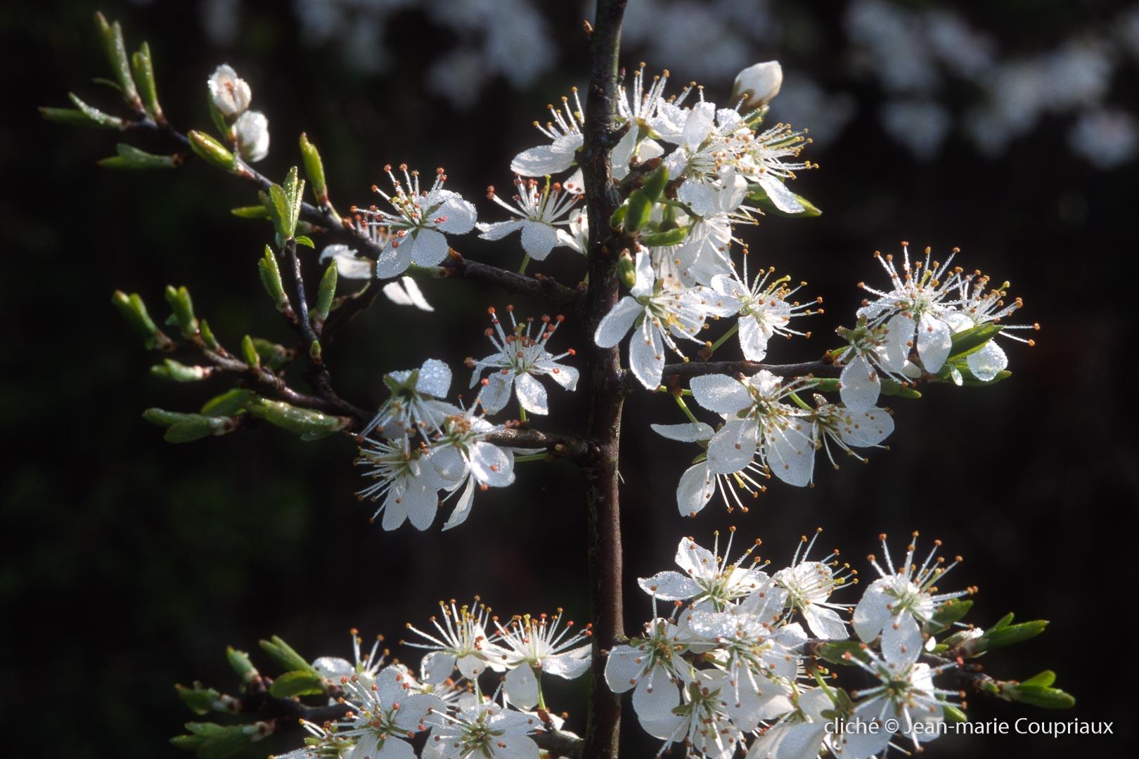 Fleurs-div-301
