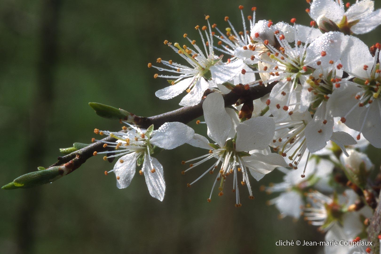 Fleurs-div-302