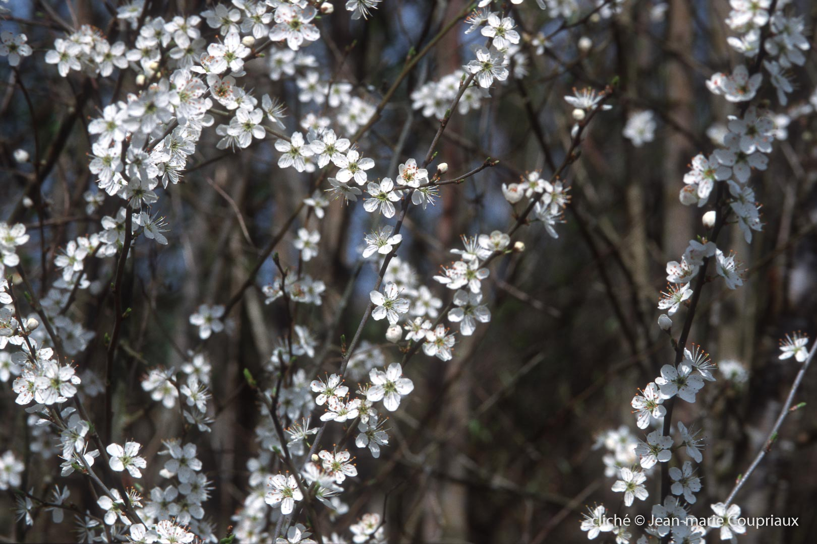 Fleurs-div-303-1