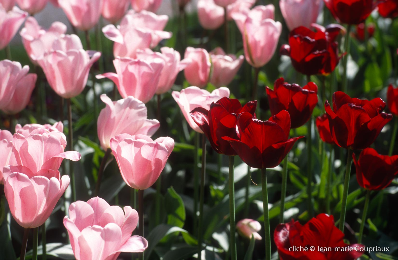 Fleurs-div-310