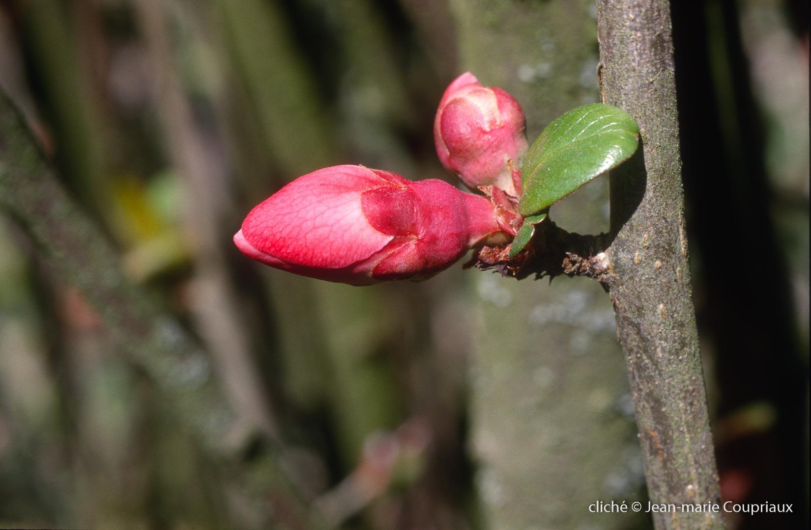 Fleurs-div-316.jpg