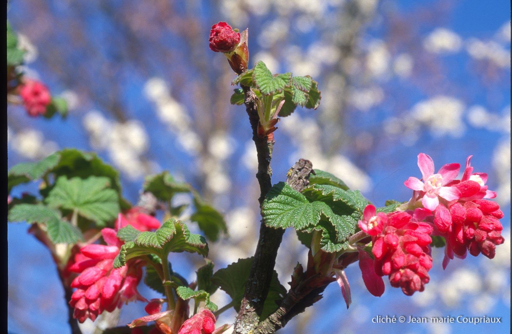 Fleurs-div-320.jpg