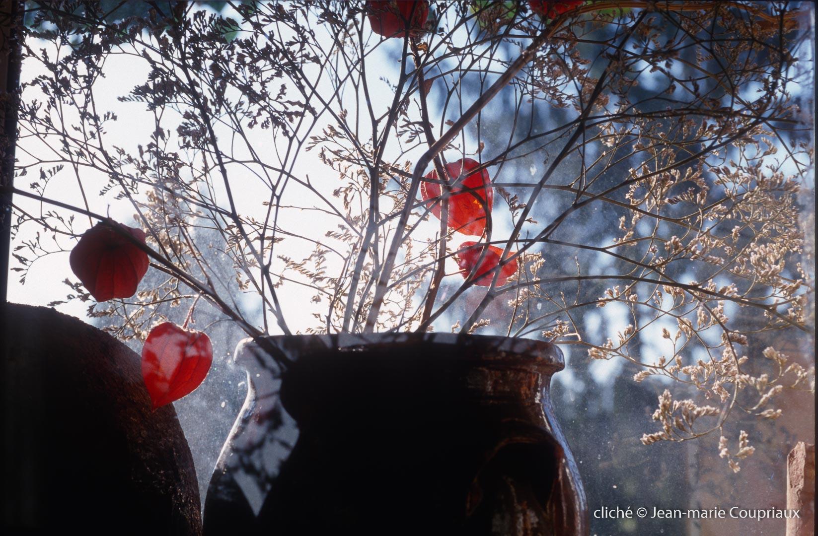 Fleurs-div-321.jpg