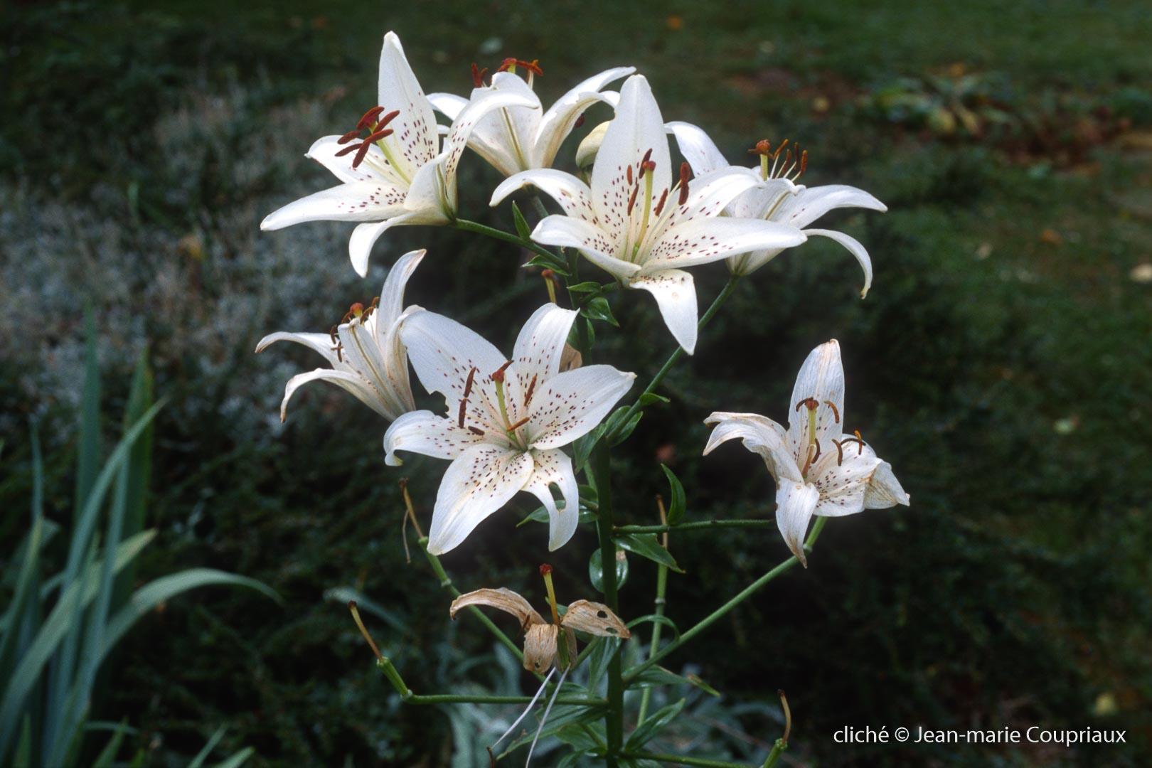 Fleurs-div-324