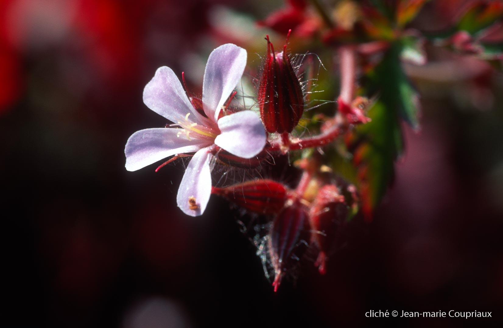 Fleurs-div-350.jpg