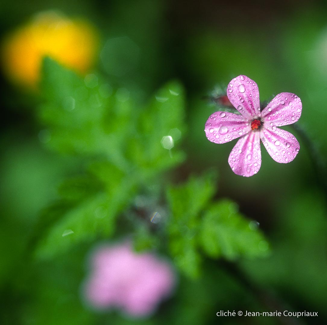 Fleurs-div-352