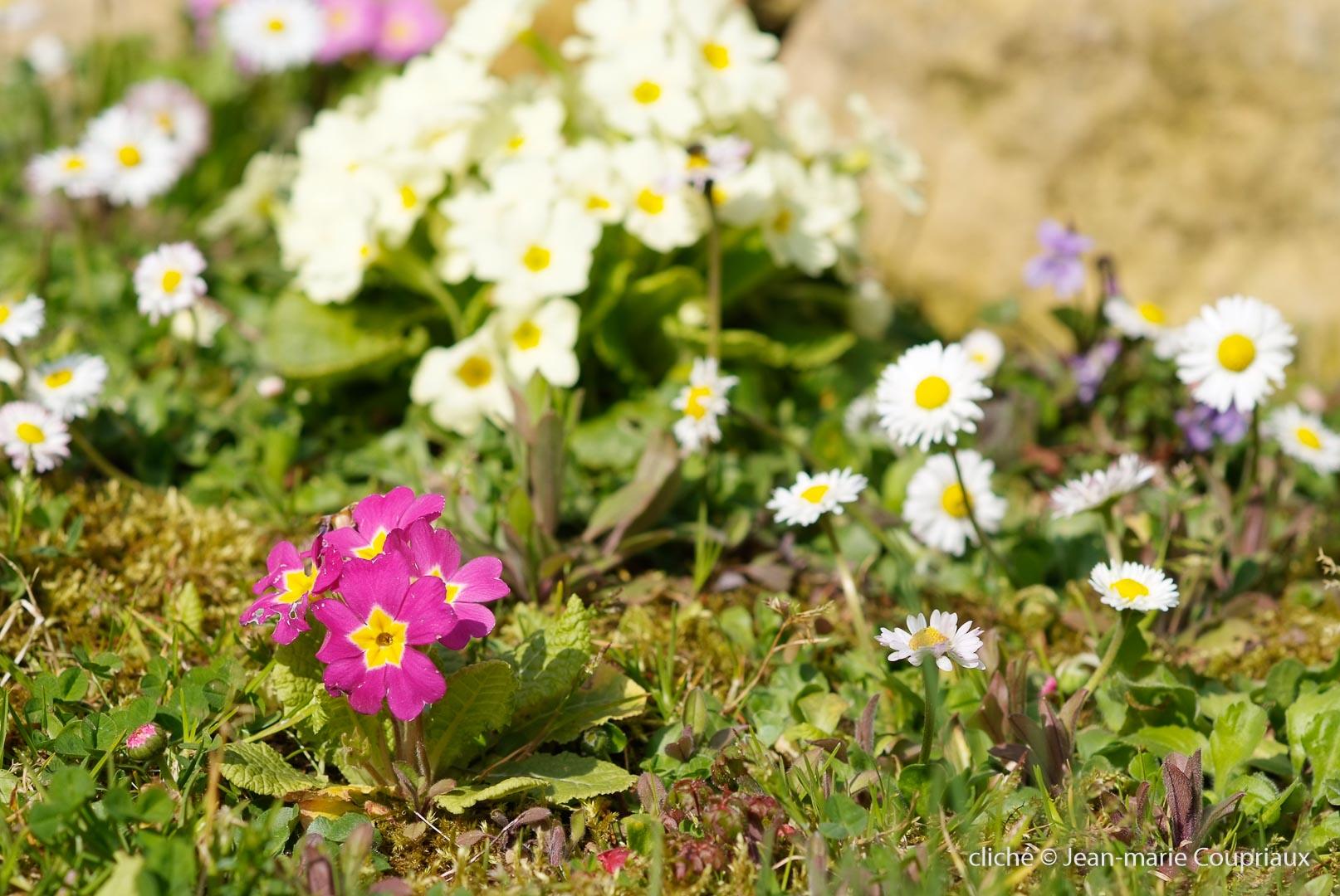 Fleurs-div-359.jpg