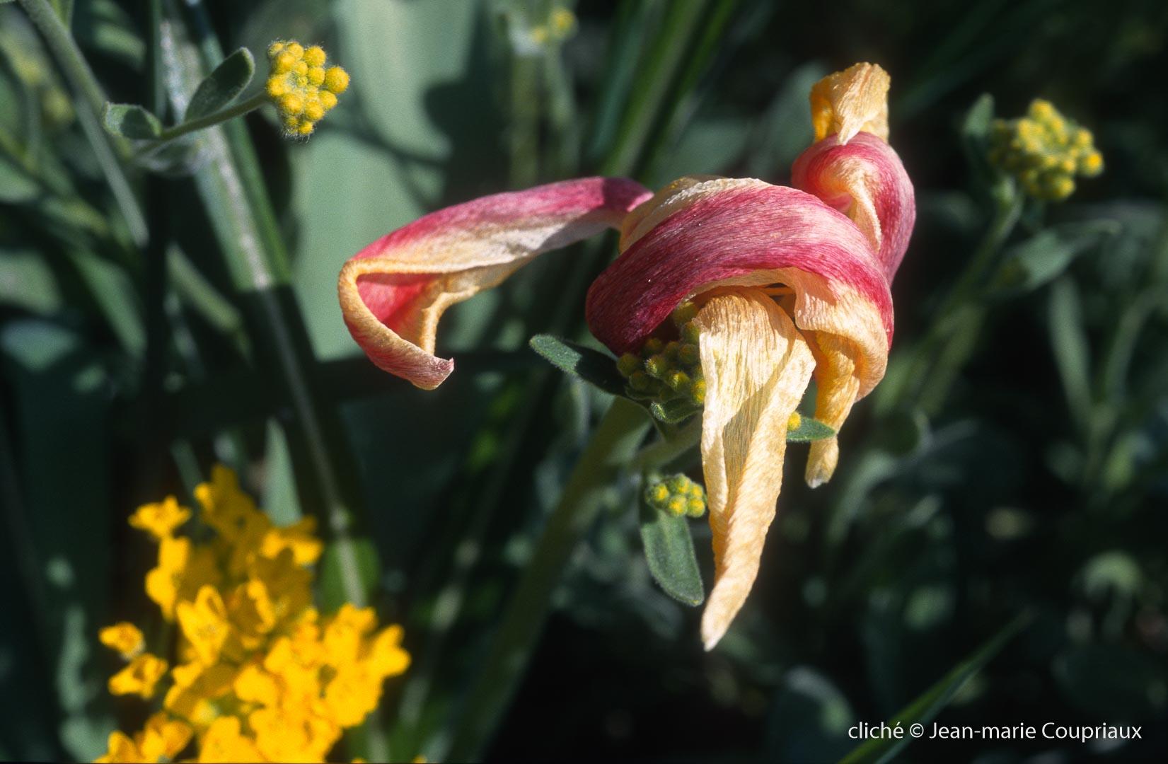 Fleurs-div-361-1