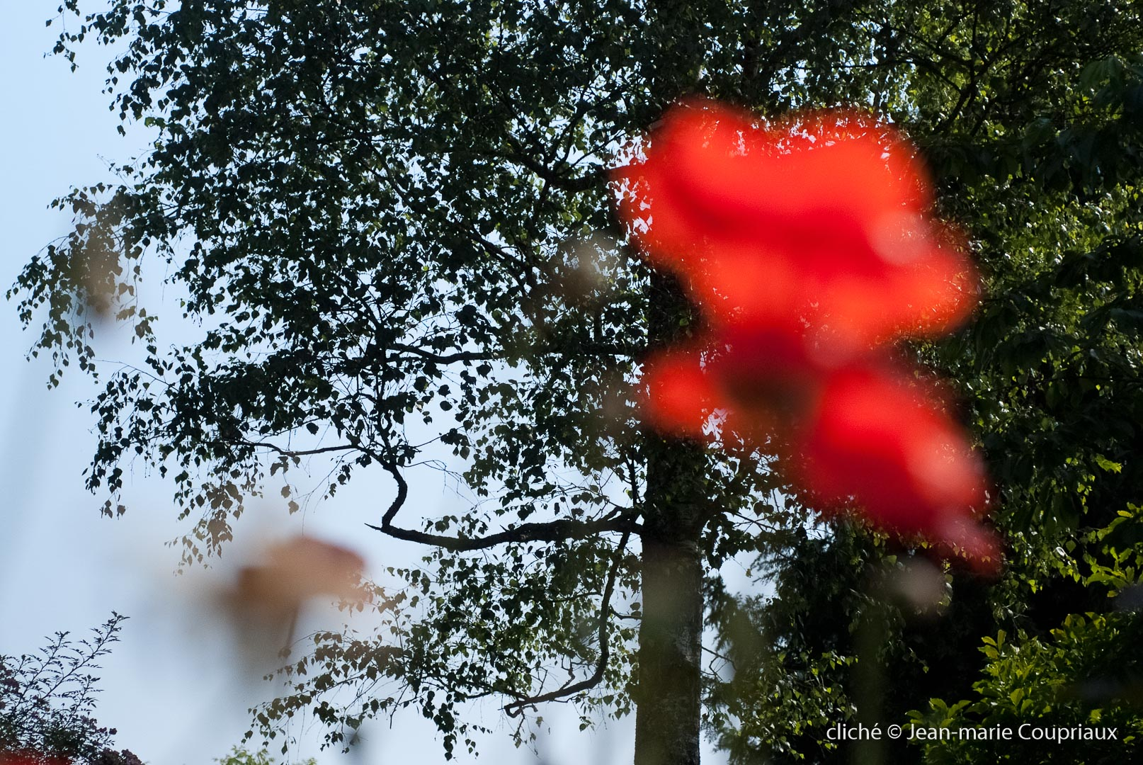 Fleurs__coquelicots-62.jpg