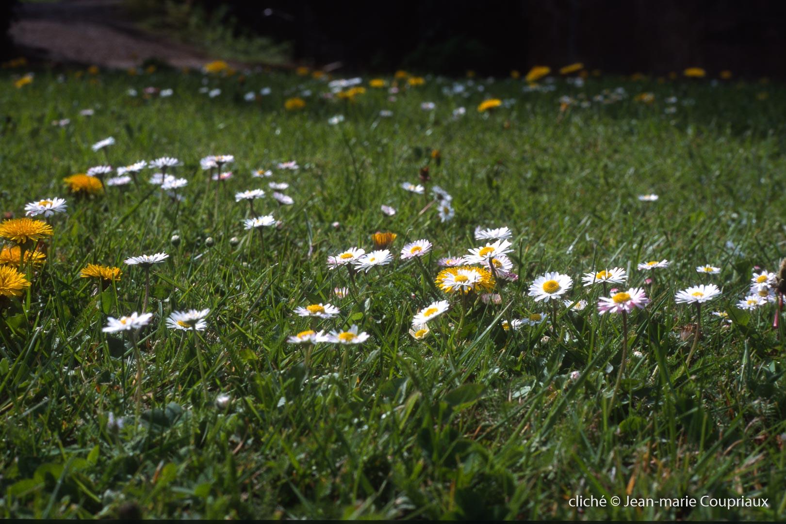 Nature-158.jpg