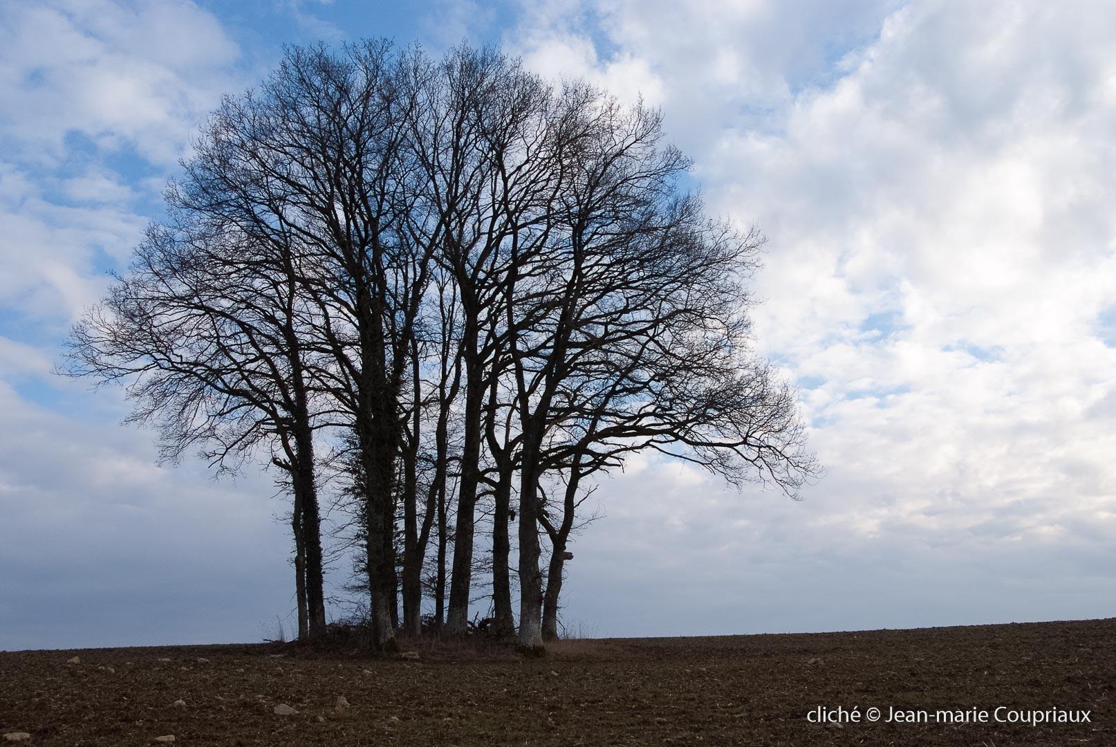 Nature-2010-2.jpg