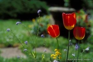 006_Nature-Menoux-6