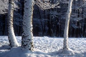 019_Nature-Menoux-18