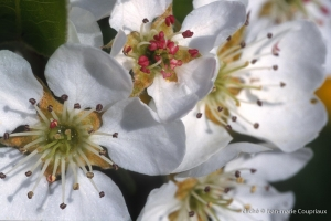 063_Nature-Menoux-55