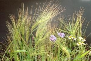 1999_divers-fleurs-30