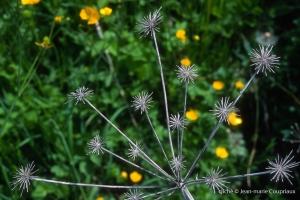 Fleurs-Art-26