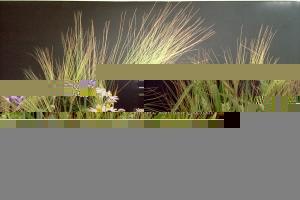 Fleurs-champs-1999-11