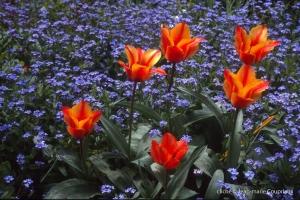Fleurs-div-136